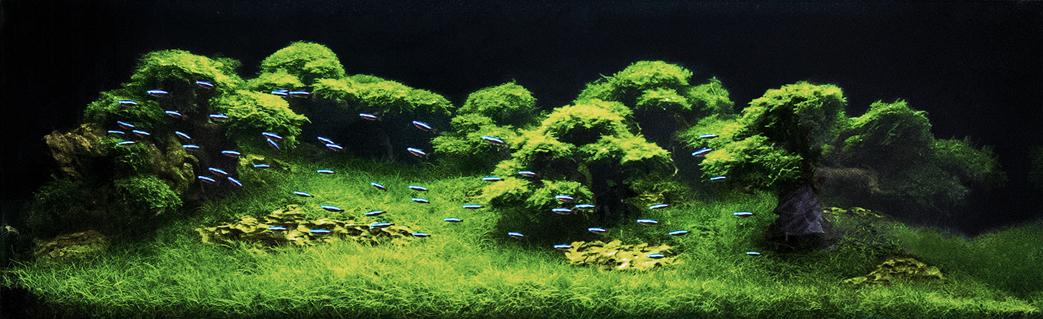 Aquascape akvária na míru
