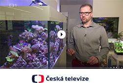 Akvaria.cz
